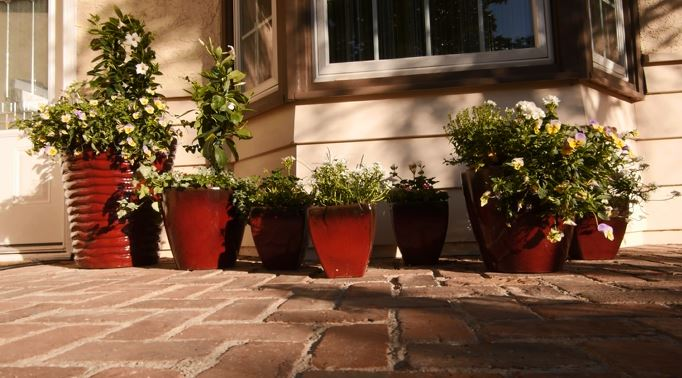 Potted Plants Adding Color to Earthtones